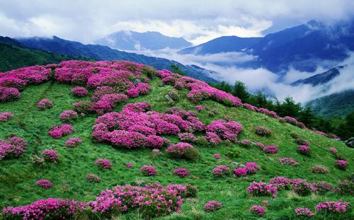 Baraebong Peak (바래봉)