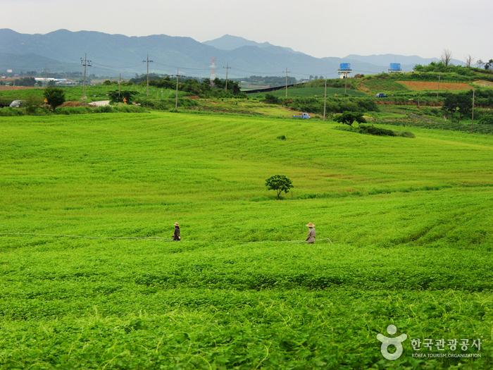 Borinara Hagwon Farm...