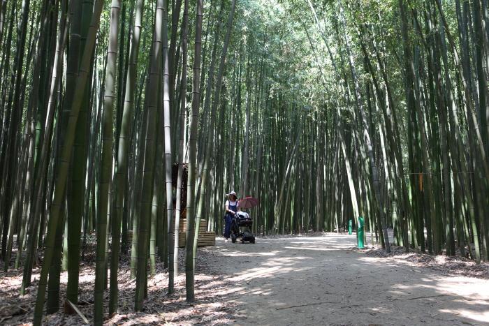 도심 한복판에서 만나는 초록 세상, 울산 태화강 십리대숲 사진