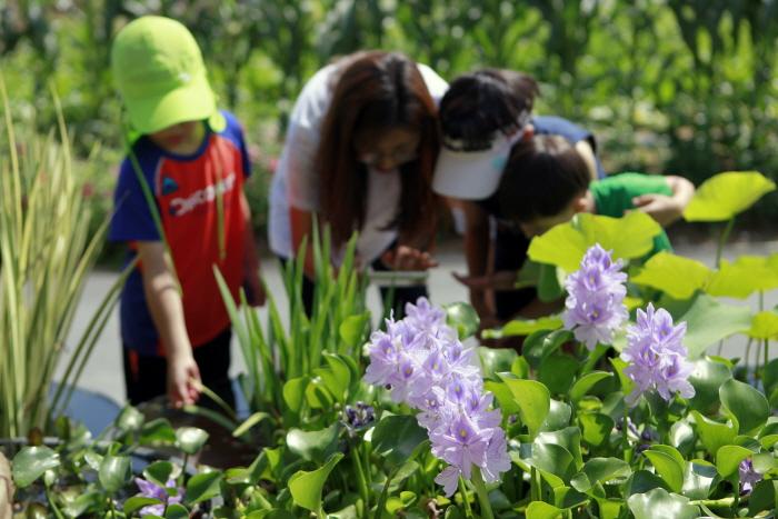 청원연꽃마을의 수생식물 화분 관찰