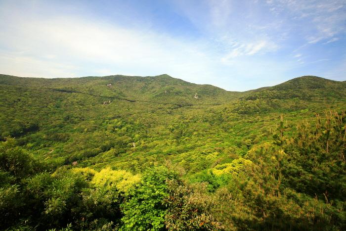 우리나라 최대의 난대림을 걷다, 완도수목원 사진