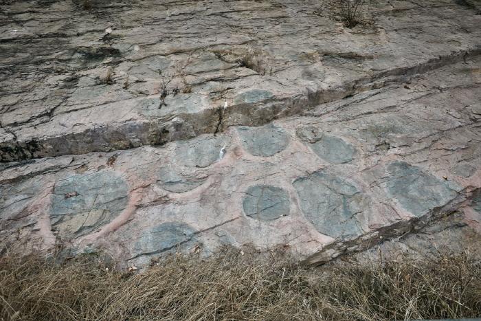 의성 제오리 공룡발자국화석 산지