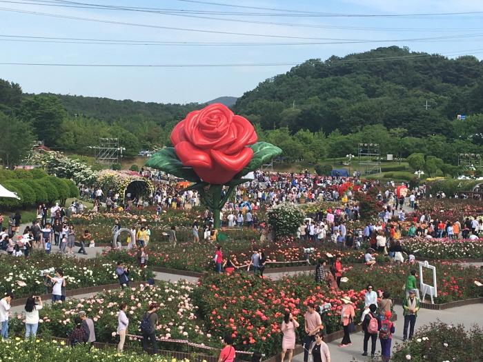 울산대공원 장미축제 2020