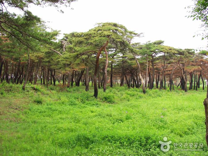 Provinzpark Naksan (낙산도립공원)
