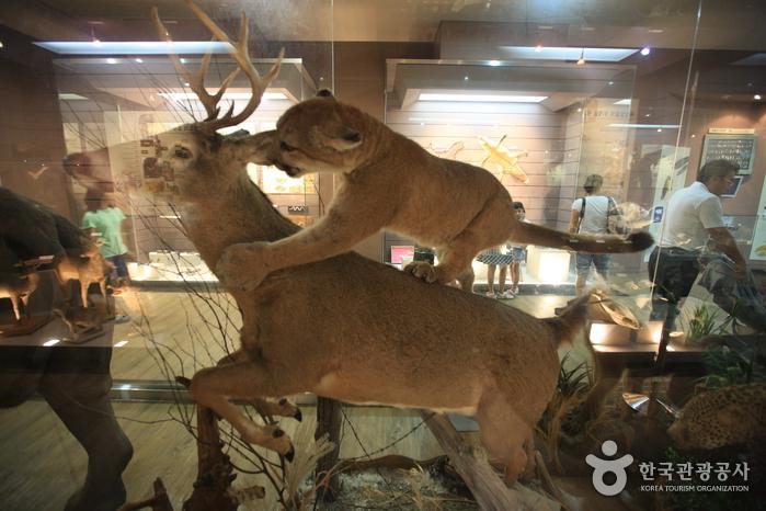 Музей естествознания Мокпо (목포자연사박물관)18