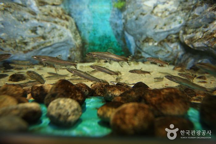 민물고기생태체험관 사진20