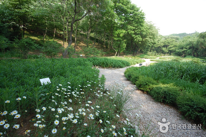 Kwanak-Arboretum der Seoul National University (서울대 관악수목원)