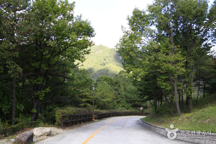 Seongjubong Recreational Forest (성주봉자연휴양림)