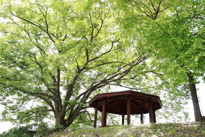 청원연꽃마을의 동구나무 아래 쉼터
