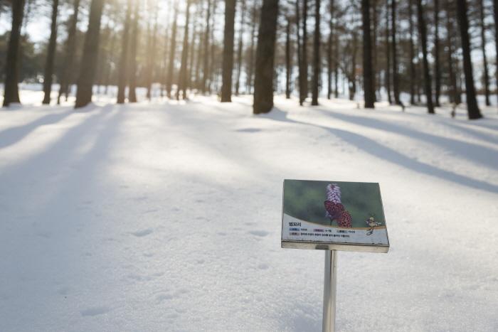 겨우내 눈이 소복이 쌓인 자리에 봄부터 가을까지 야생화가 핀다.