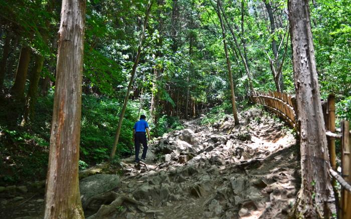 주의가 필요한 뿌리의 길(다산초당)