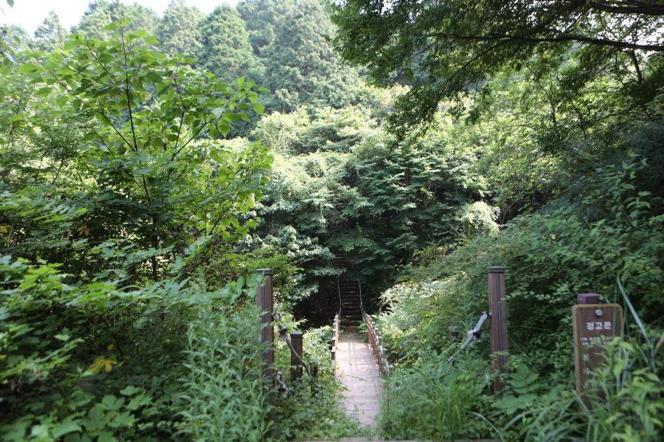 고흥마중길 3코스 봉래산 삼나무 편백숲길