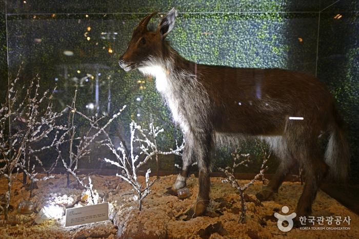 Музей ДМЗ (DMZ박물관)5