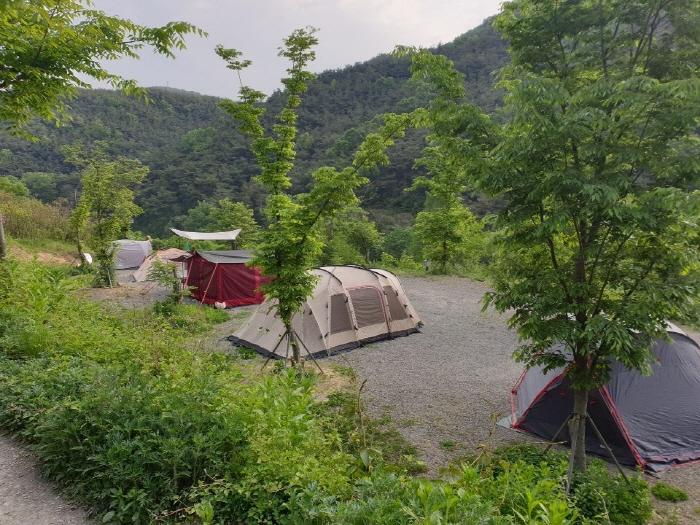 트리독스 반려견 전용 캠핑장