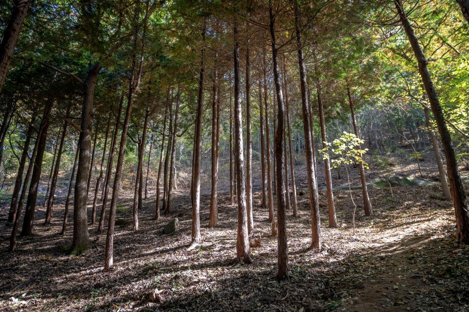 물무산 행복숲
