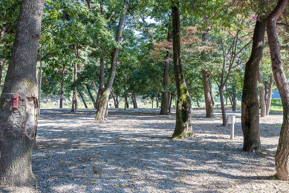 숲속의하모니