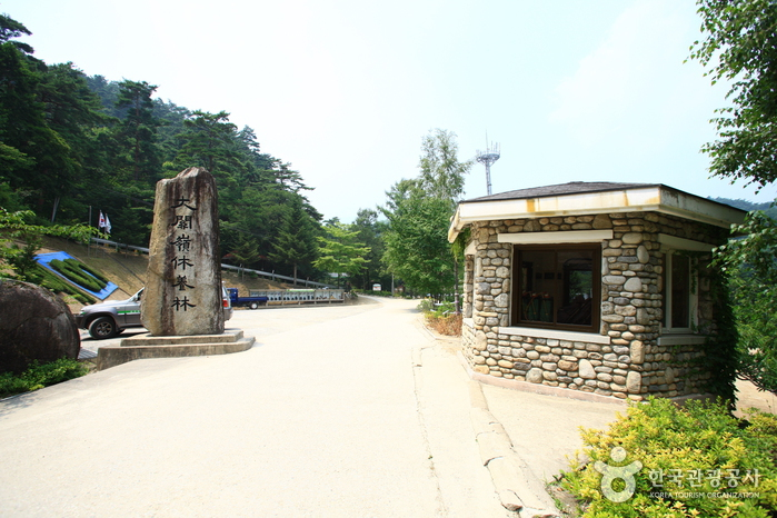 Daegwallyeong National Recreational Forest (국립 대관령자연휴양림)