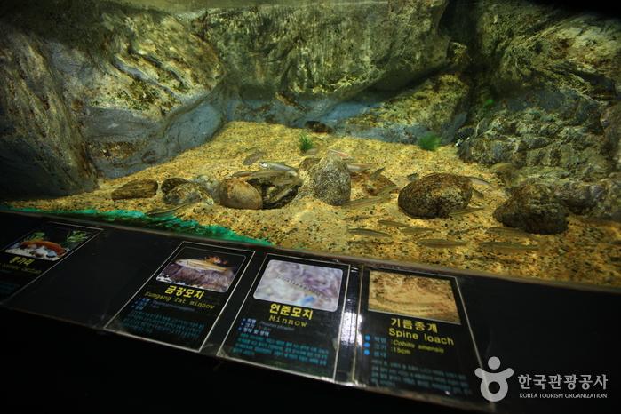 민물고기생태체험관 사진19