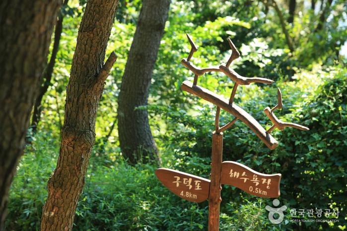 Дорога Тальмачжи на Хэундэ (해운대 달맞이길)10