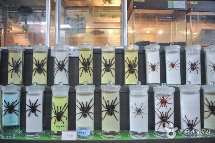 Arachnopia (JooPil Spider Museum) (아라크노피아 생태수목원·주필거미박물관)