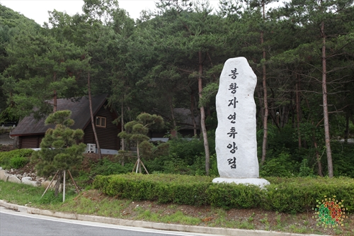Bonghwang Natural Forest (봉황자연휴양림)