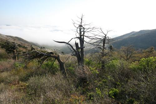 Berg Hambaeksan (함백산)