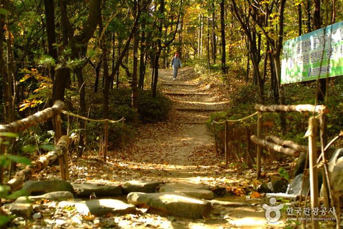 Cheongdam Park (청담공원)