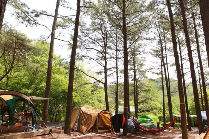 [전남 보성 메타세쿼이아 가로수길] 울창한 나무들의 속삭임, 숲에서 누리는 힐링 산책 2