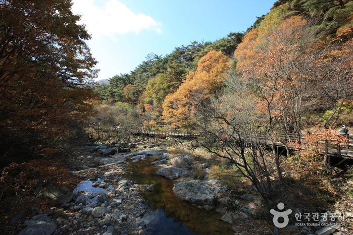 雉岳山国立公园(치악산국립공원)