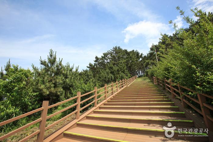 Парк Тэванам (대왕암공원)45