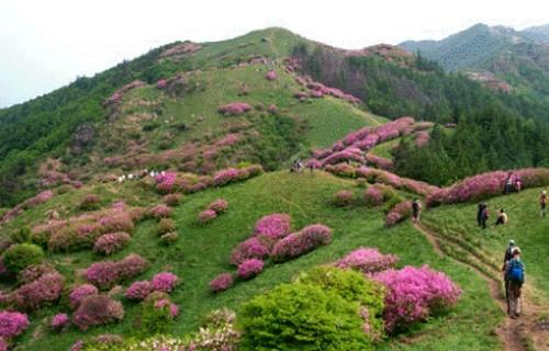 남원 바래봉 철쭉제 2019