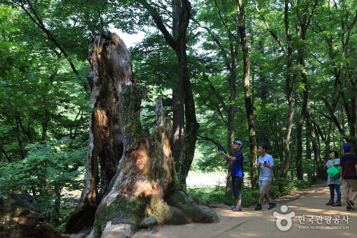 지난 태풍에 허리가 잘려 나갔지만 여전히 자리를 지키는 나무