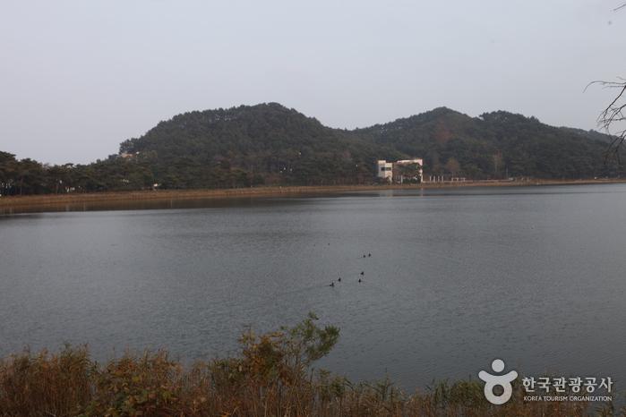 花津浦(花津浦湖)(화진포(화진포호))