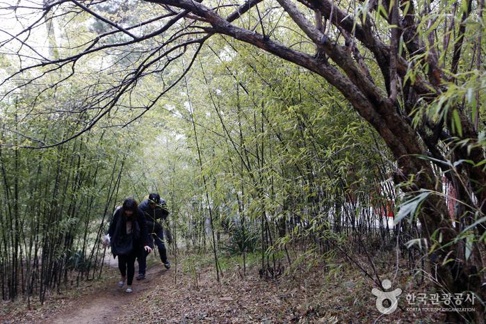 드라마 촬영지 오죽헌 대나무 숲
