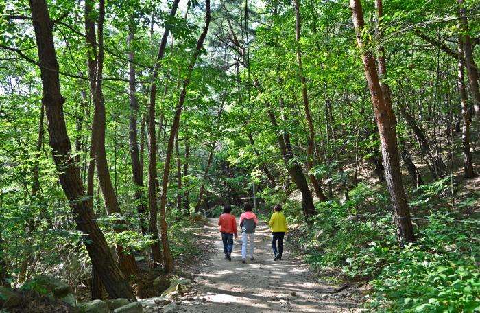 쌍곡폭포로 가는 완만한 숲길