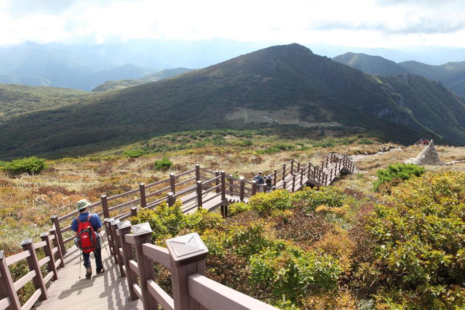 천황산에서 나무 계단을 따라 천황재로 내려가는 길