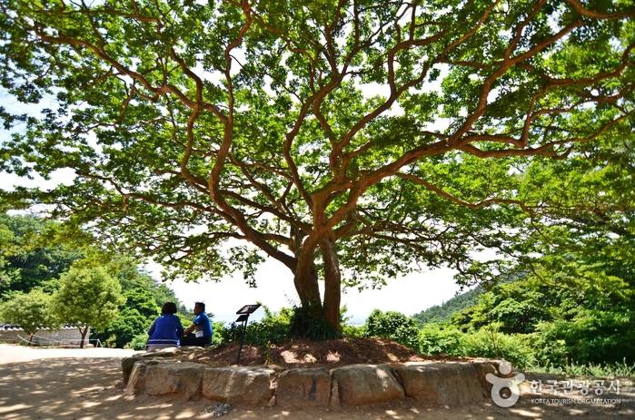 백련사의 멋스런 배롱나무