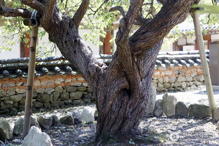 Храм Сонамса (선암사)5