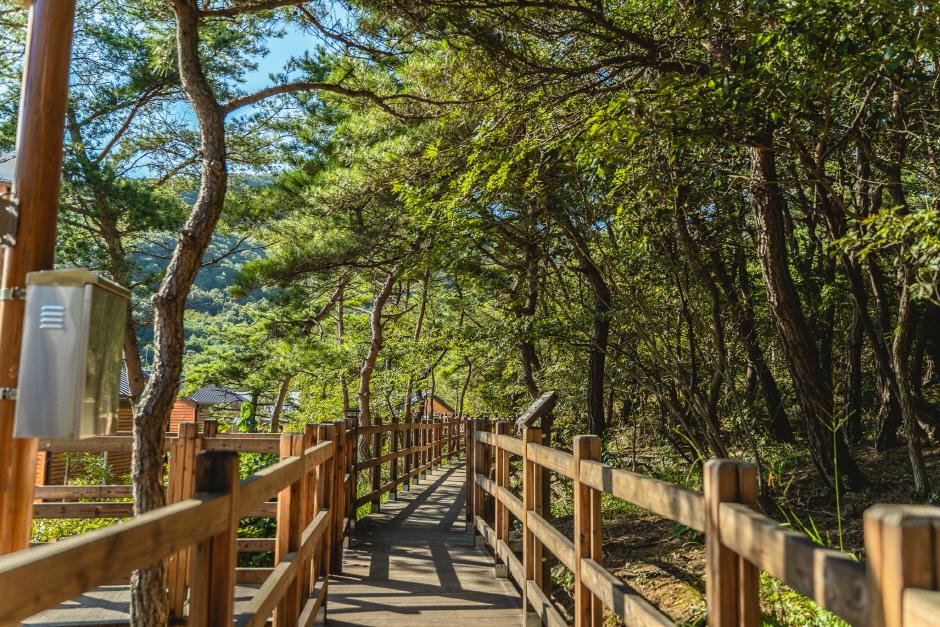 국립대전숲체원