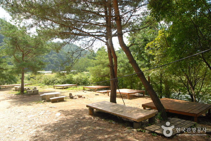 Jucheongang Riverside Recreational Forest (주천강 강변자연휴양림)