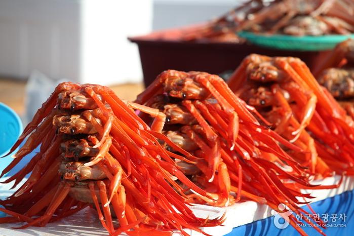 Fischmarkt Jumunjin (강릉 주문진수산시장)