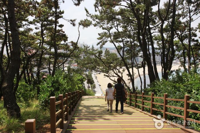 Парк Тэванам (대왕암공원)44