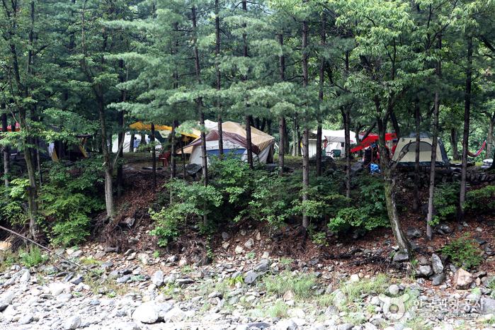 솔숲을 함께 즐기는 캠핑장