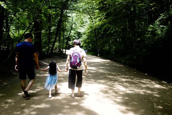 [월정사 전나무 숲길] 천년의 세월을 지켜온 신령한 숲길 3