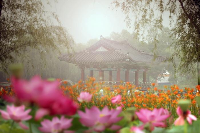 Seodong-Lotusblütenfestival Buyeo (부여서동연꽃축제)