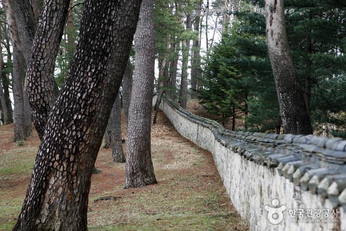 오죽헌 뒤뜰의 소나무 숲