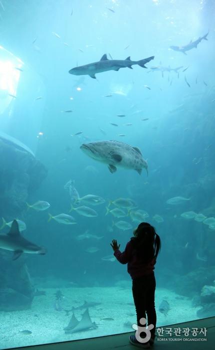 메인수조 안의 다양한 어종을 관찰하는 아이