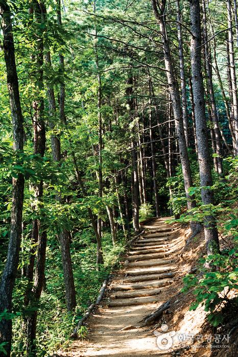 숲속으로 나무를 계단식으로 해놓은 길이 있다.