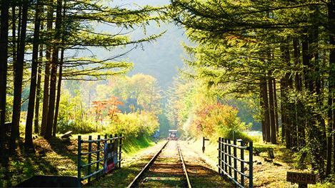秋天一起去骑铁路自行车吧!