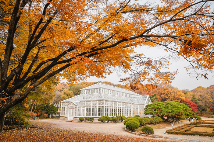 La grande serre du palais Changgyeonggung